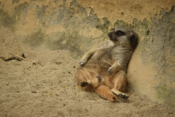 Zoo De Cali (15)