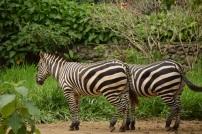 Zoo De Cali (16)