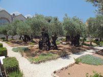 Huerto de Getsemani (3)