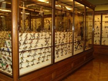 Museo de historia natural (102)