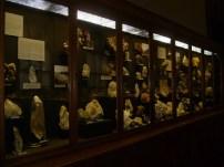 Museo de historia natural (12)