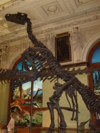 Museo de historia natural (23)