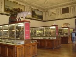 Museo de historia natural (41)