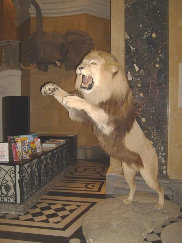 Museo de historia natural  (5)