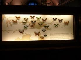 Museo de historia natural (65)
