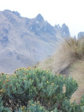 Parque Nacional Cajas (19)