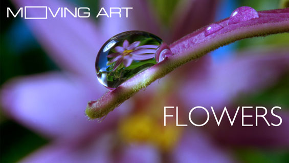 moving-art_flowers