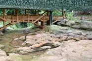 Parque Arqueológico San Agustín (31)