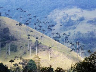 Valle del Cocora (1)
