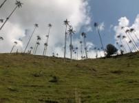 Valle del Cocora (2)