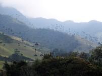 Valle del Cocora (4)