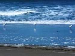 playas-villamil-en-formacion-de-pesca