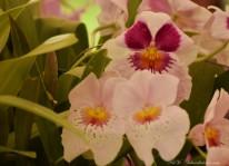 exp-orquideas-jbb-2016-33