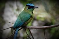 Aviario Zoo CALI 2
