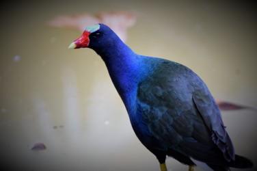 Aviario Zoo CALI 3