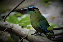 Aviario Zoo CALI