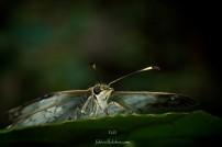 Mardukk VI CALI 2017 FaVi (33)