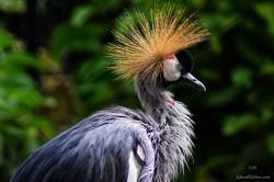 Zoo Santafe Medellin (10)