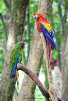 Zoo Santafe Medellin (11)