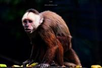 Zoo Santafe Medellin (15)