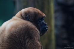 Zoo Santafe Medellin (16)
