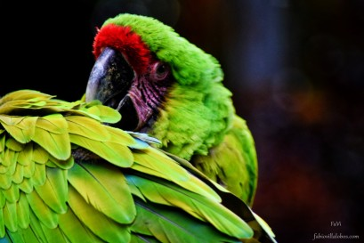 Zoo Santafe Medellin (17)