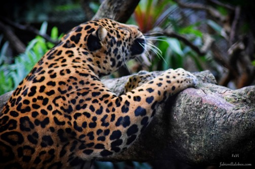 Zoo Santafe Medellin (19)