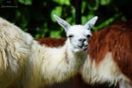 Zoo Santafe Medellin (2)