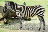 Zoo Santafe Medellin (5)