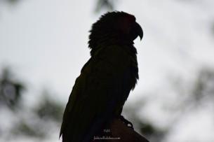 Zoo Santafe Medellin (9)