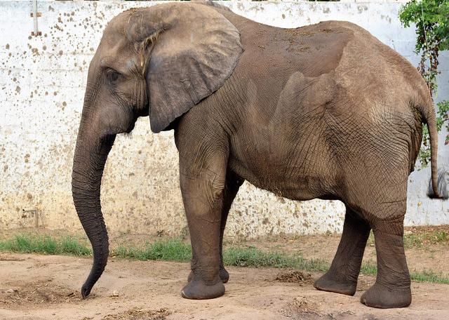 Elefante Zoo Bquilla