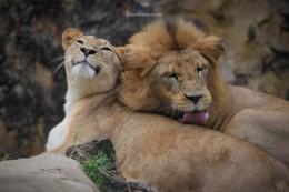 Zoo Cali 002