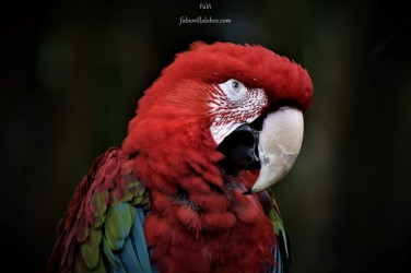 Zoo Cali 005